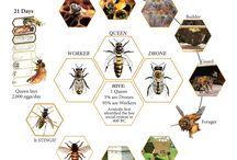 méhek- darazsak