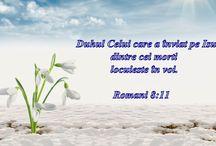 versete biblice - bible verses