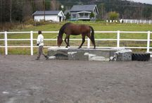 Horse Obstacles / As we build our horse farm, we want to put obstacles in to train the horses to not fear them.