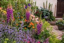 Cottage Gardens / by Susan Sebotnick