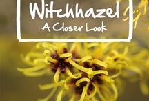Medicinal & Wild Edible Plants.