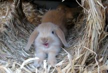 Kaninchen-Rabbit
