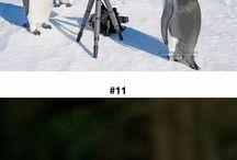 photographer animals