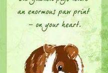 I love Guinea pigs / by Edna Dougary