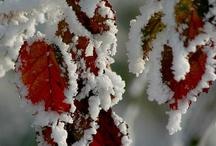 foto snø
