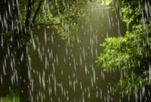 Un giorno di pioggia..