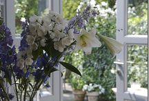 summer home | garden / by sentimentaljunkie