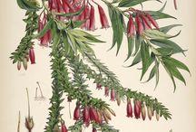 plant ilustrations