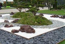 Камни и растения