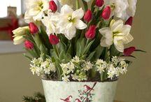 Csodálatos virágok
