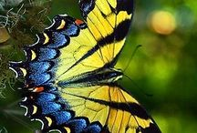 Butterfly / by Gail Martinez