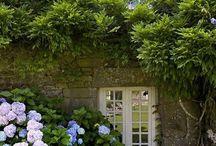 Belle photo hortensia glycines