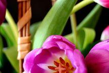 Flores am♥