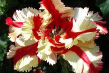 Floral fanatic