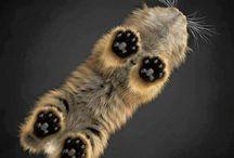 Kitty cat ^.^
