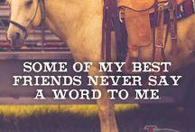 Horses my passion
