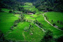 Indonezia | Bali | Taiwan