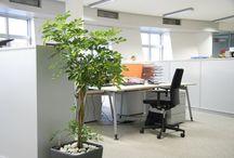 Indoor Plants Installations / We bring greenery to offices and also provide taking care of the plants. For more info please visit www.rosmarino.cz / Přinášíme zeleň do kanceláří a také poskytujeme péči o zvolené rostliny. Pro bližší info prosím navštvite www.rosmarino.cz