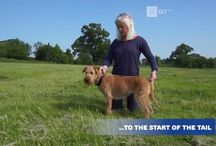 Ginger Ted Videos / Check our the GT.TV channel