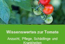 Gemüsegarten / Wertvolle Gartentipps rund um den Gemüsegarten, mit tollen Garten Ideen & Tipps und Tricks zu Themen wie Anbau, Gemüse und Pflege.