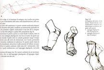 Anatomy ✤ Feet