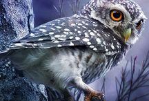Hoot / The owlery / by < Hannah >