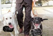 Dogs in Weddings / Cute pups that (almost!) steal the show at weddings.