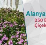 Alanya'ya 250 Bin Çiçek Dikilecek