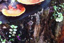 Small Garden ...... wet / especiais..cores