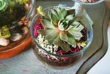 Terrarium and Fairy Garden