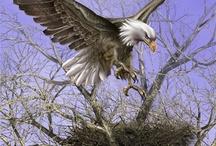 Aves del espacio