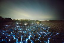 Light / Photographer Lee Eunyeol constructs elaborate light installations that appear as if the night sky was flipped upside down with glowing stars and planets nested inside tall grass or between deep earthen cracks / by Darek Wilkosz
