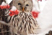 owl I need is....