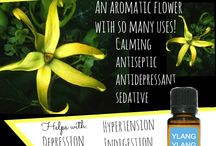Oils ain't just oils / Essential oils for health and wellbeing