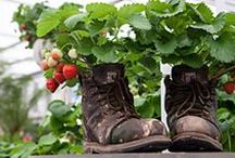 Community Garden Ideas / Using outside public spaces to create beautiful and useful areas for the community.