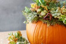 Peridot Loves: Fall Arrangements