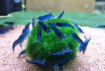 Aqua / Aquarium