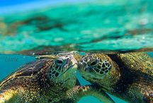 Turtles...tortues...je les♥!!!
