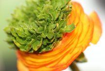 macrofotografie bloemen