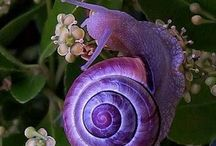 shells-snails