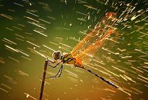 vážky,hmyz, motýli,plži