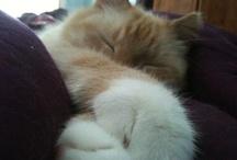 Kittly cats