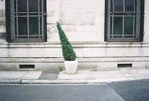 Form, Shape, Topiary / by Lindsay Evans