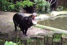 Travel: NL - Animal Parks / The Netherlands has some quite impressive animal parks. Some of the biggest are mentioned here.