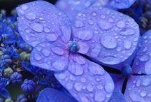 Moods: Purple