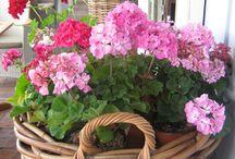 Jardinière et jardin