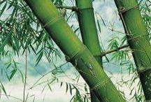 Farm Bamboo
