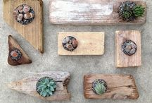 Succulents DIY