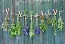 Herbs / We love to offer you our fresh rosemary sage tarragon and English time