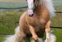 Mooie paarden